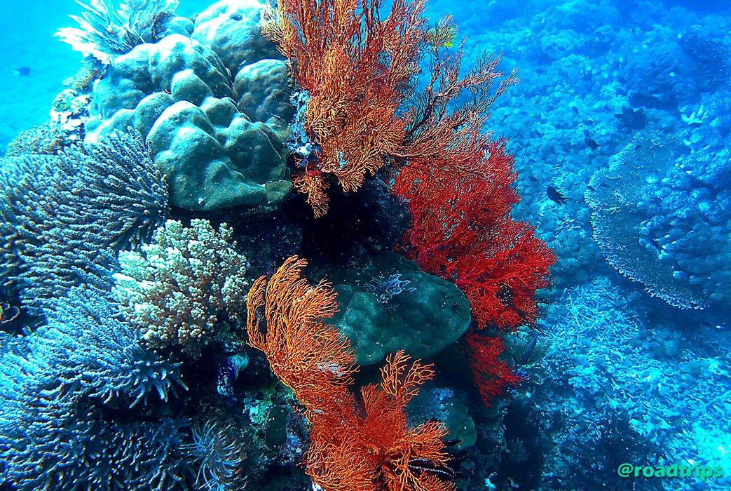 korallen2.jpg