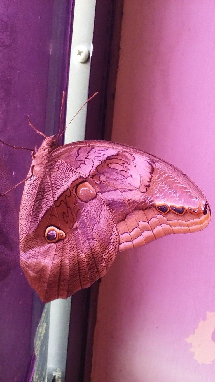 mariposa2.jpg