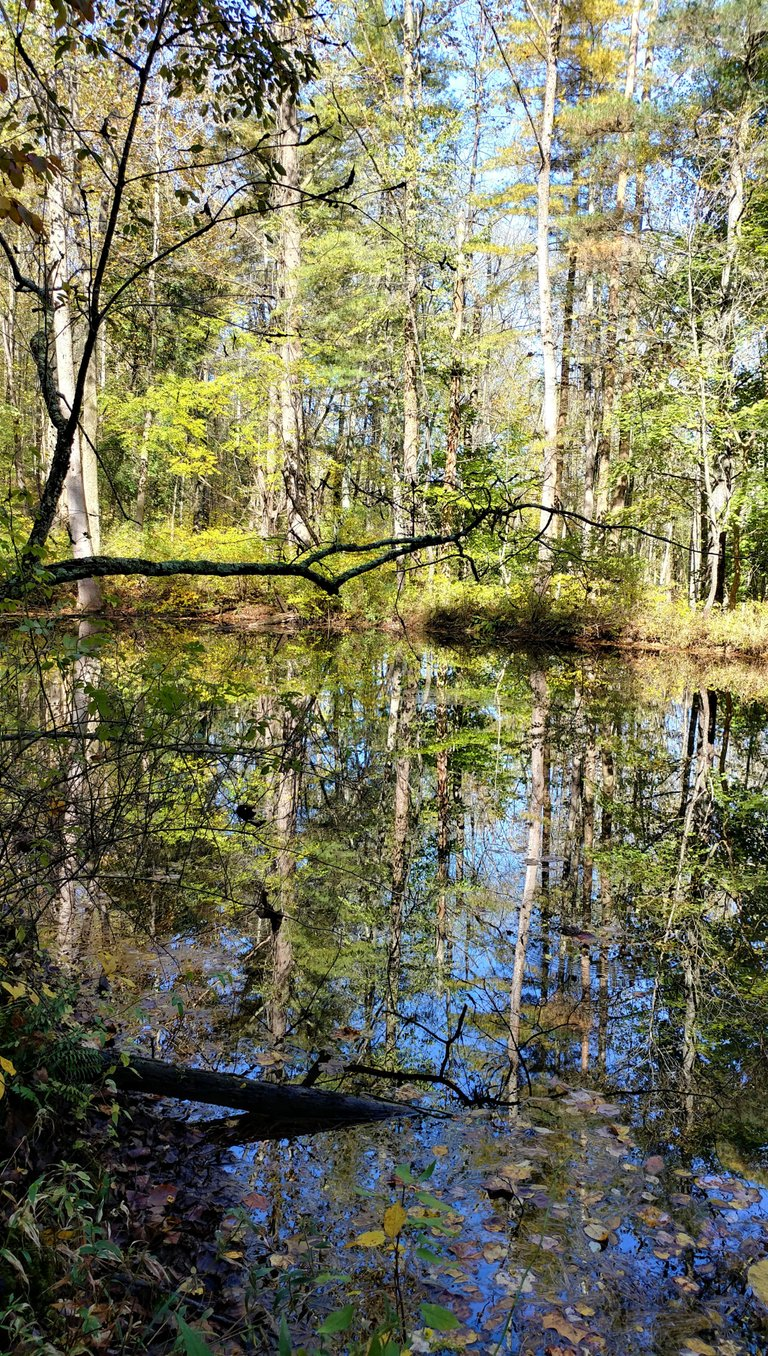 reflectionhunters12320215ok.jpg