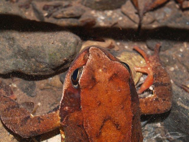 AlphabetHunt F - Frog
