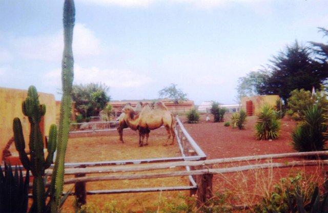 Camello Center Dromedarios.jpg