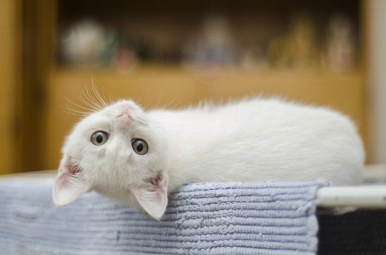 kitten1285341_1280.jpg