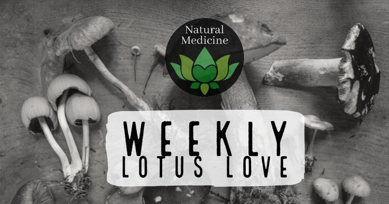 weekly lotus love.png