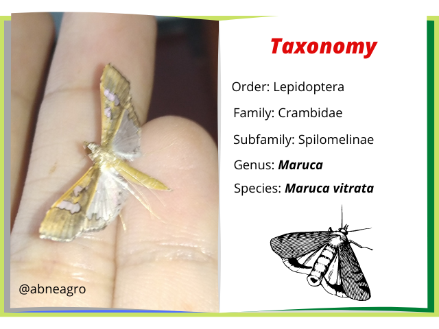 Lepidoptera(4).png