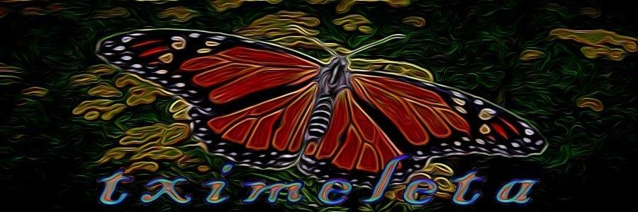 mariposas-1 (1).jpg