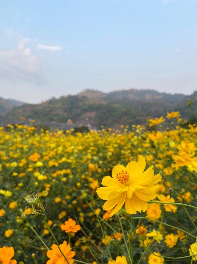 Vajiralongkorn Dam.jpg