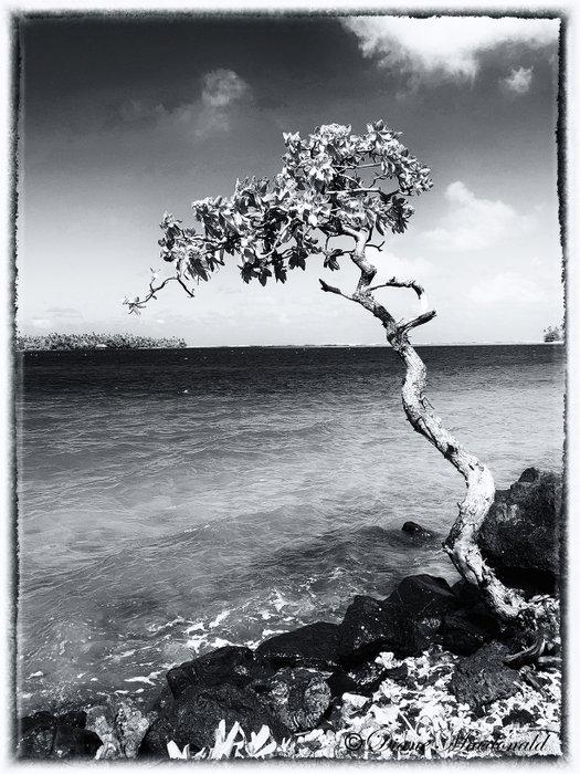 gnarled tree B&W.jpg