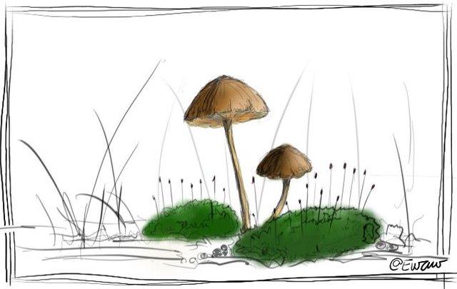 small mushroms 1.jpg