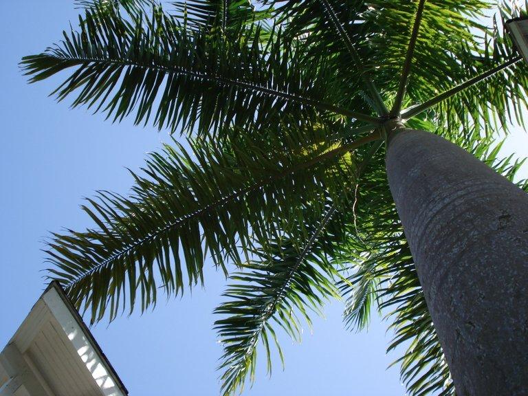 Jamaica 2014 258.jpg