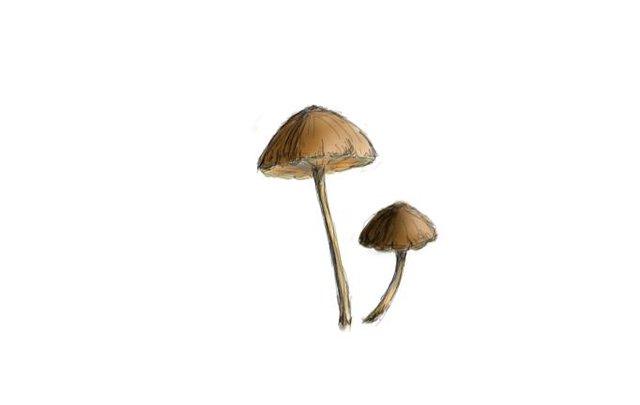 small mushroms 4.jpg