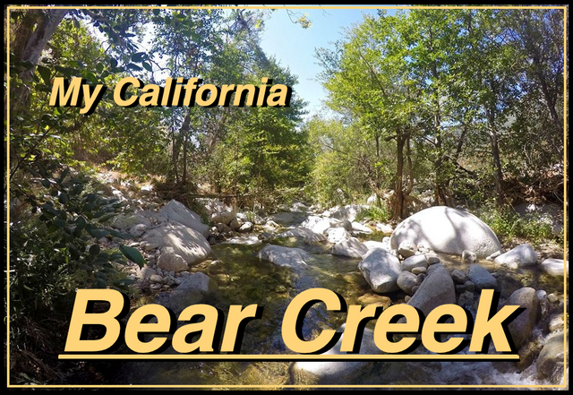 bear creek cover.png