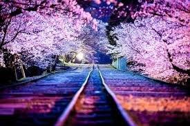flores de cerezo.jpg
