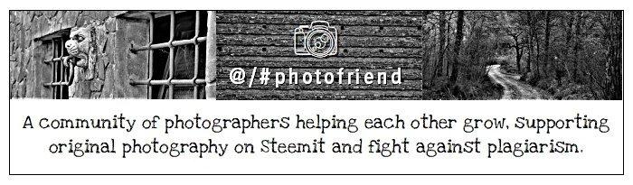 photofriend banner.jpg