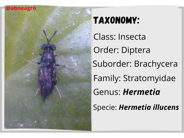 Diptera libro english.png