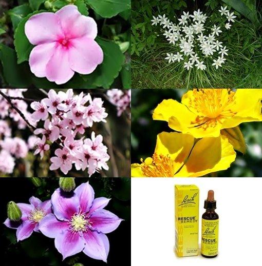 Rescue Remedy Flowers.jpg
