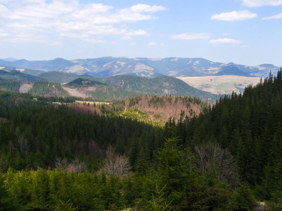 The slopes of the mountains covered with coniferous forest