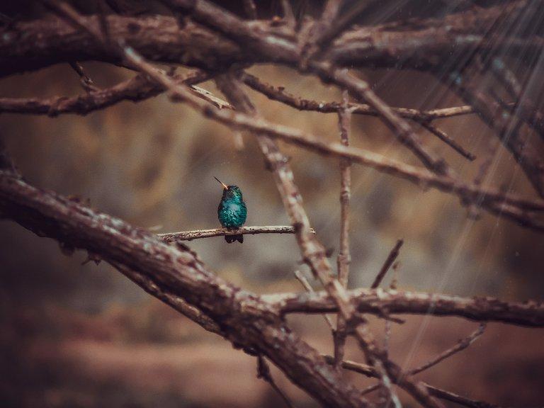 colibrí en Jardín