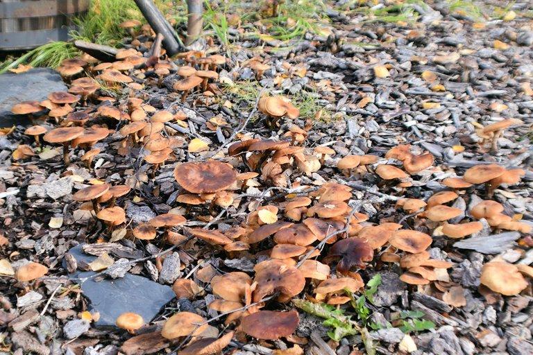 DSC_8332 - mushroom group.jpg