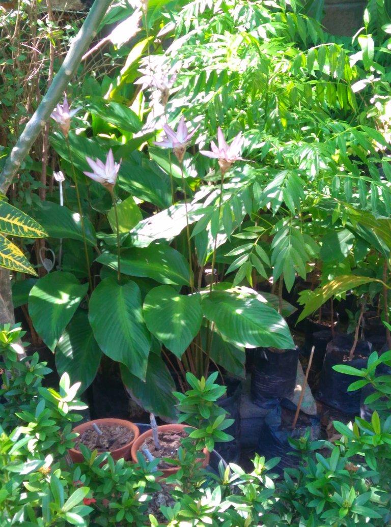 naturaleza de las plantas.jpg