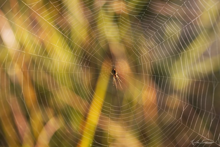 Hive AlphabetHunt Spider Web