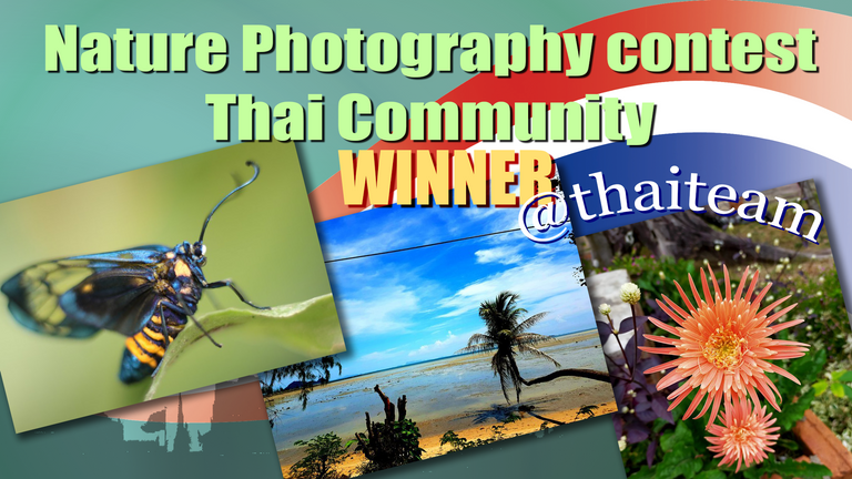 nature_photography_contest_winnersn.png