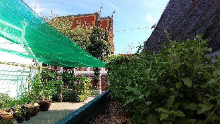 dusit_temples_bangkok_spet_2020_127.jpg