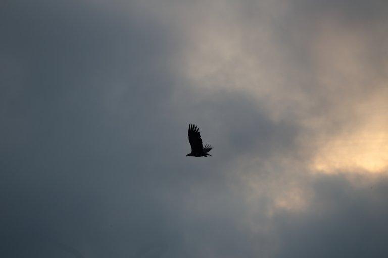 Linnut  579.JPG