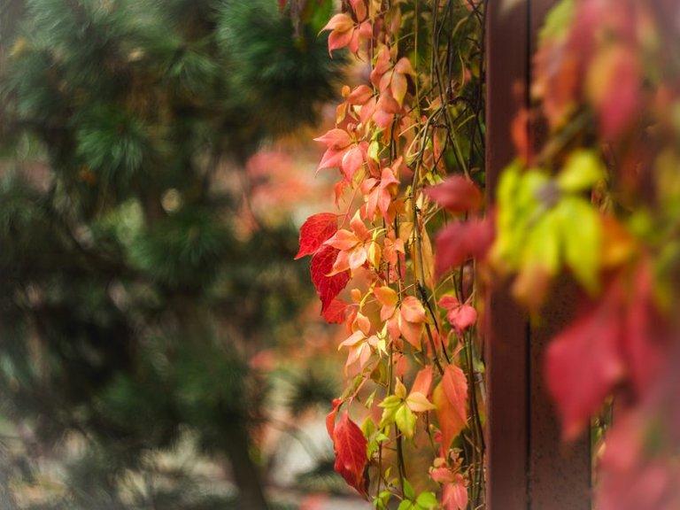 bambuka.jpg