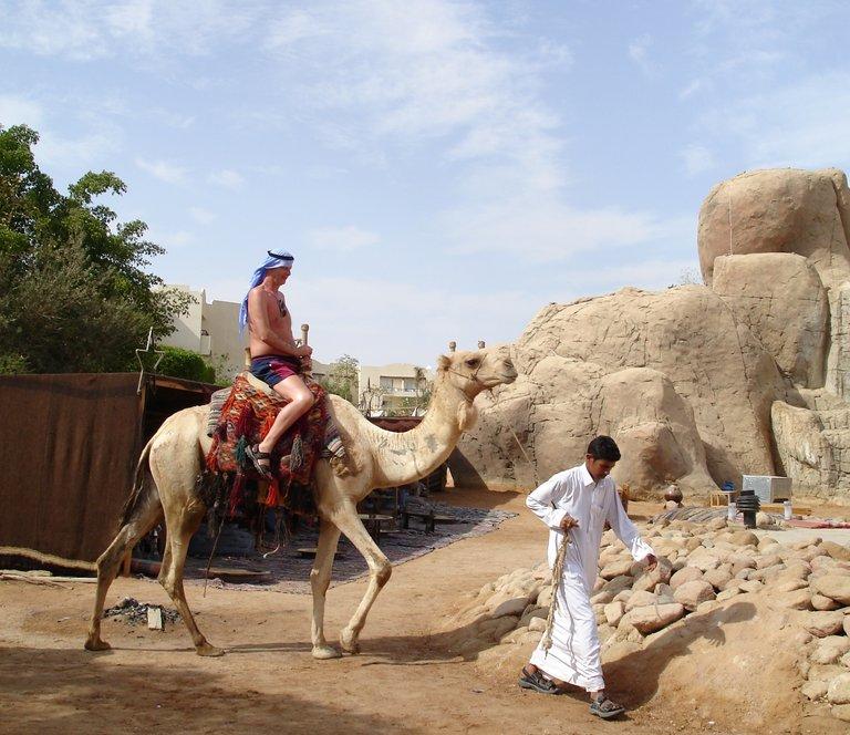 Camel5.jpg