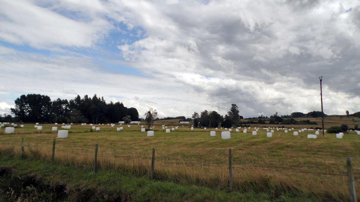 Marshmallow field.
