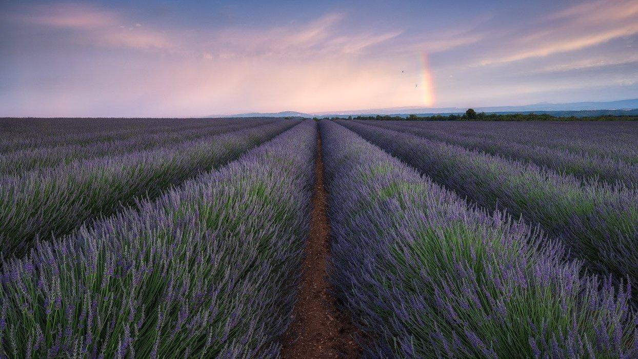 Valensole Rainbow over Lavender Field