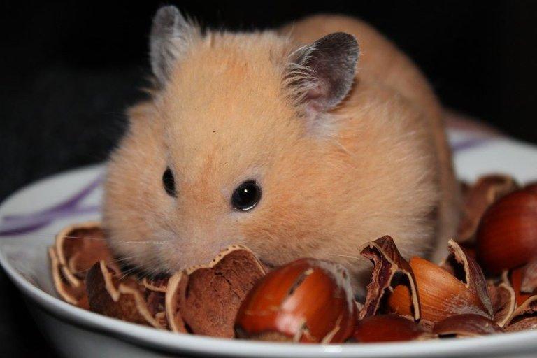 Der Mensch ist ein Hamster