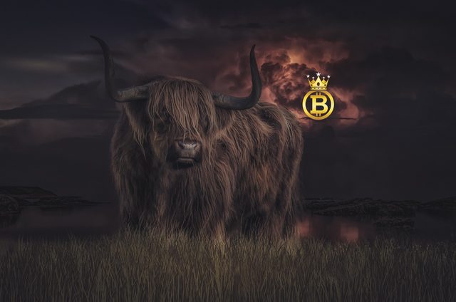 bull5.png