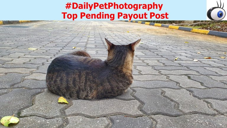 Header Image-dailypetphotography