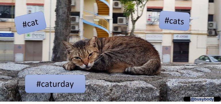 Header Image-cat