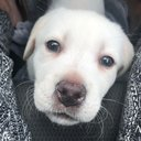 @milu-the-dog