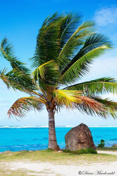 palm tree and lagoon marea anini.jpg