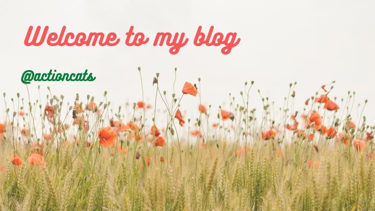 Bienvenidos a mi blog (1).png