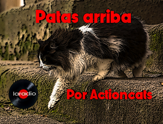 Patas_arriba.png