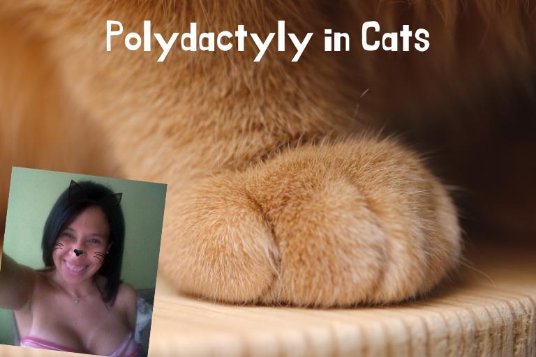 Polidactilia en gatos.png