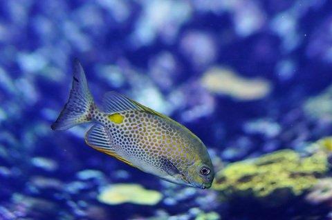 waterunderwaterswimbiologybluefish635609pxhere.com 1.jpg