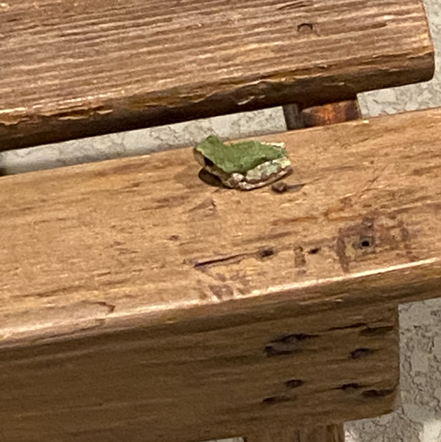 Frog 1.PNG
