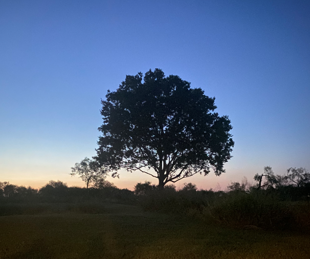 Lone tree at sunset.PNG