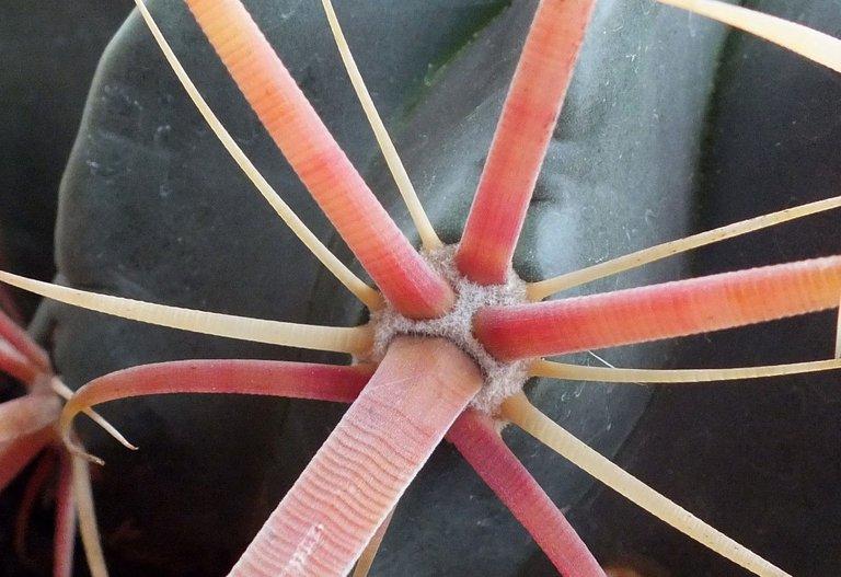 0908-Spines.jpg