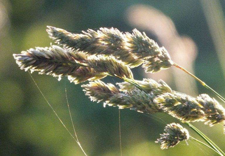 0204-Grass3.jpg