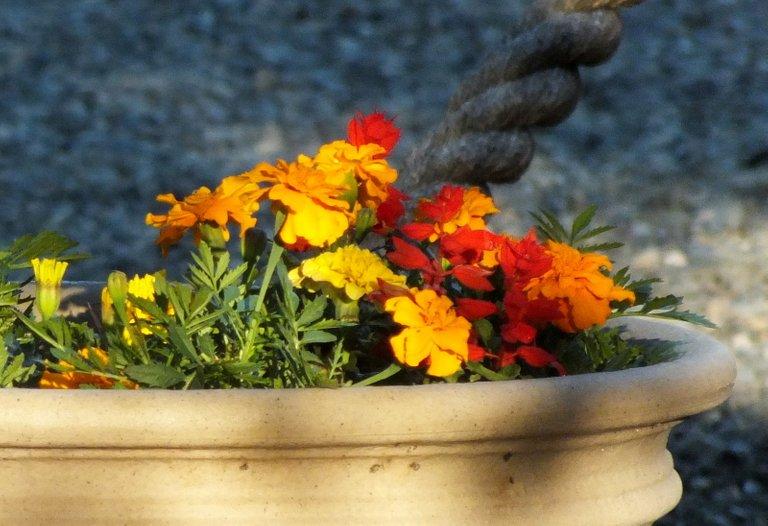 0211-FlowerPot.jpg