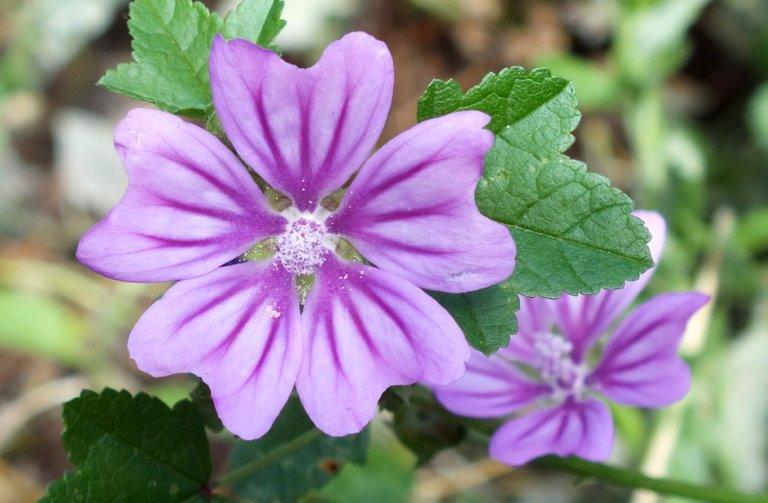 1210-PurpleFlower.jpg