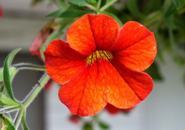 0068-Orange.jpg