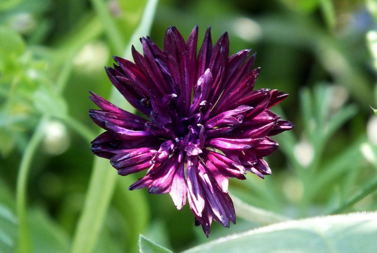 0124-Purple.jpg