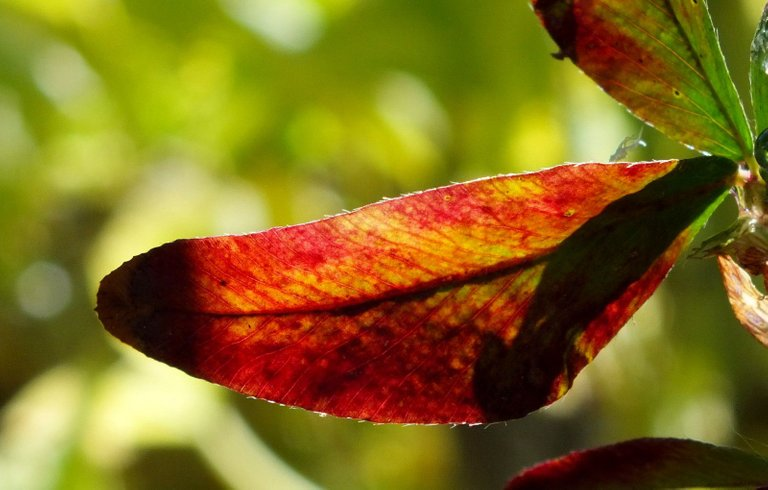 0340-Leaf.JPG